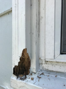 wood rot on brick mould